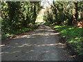 TL1182 : Gains Lane Great Gidding by Michael Trolove