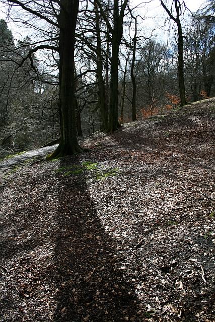 Trees in Hebden Dale