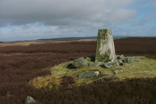 Trig, Point on Black Down