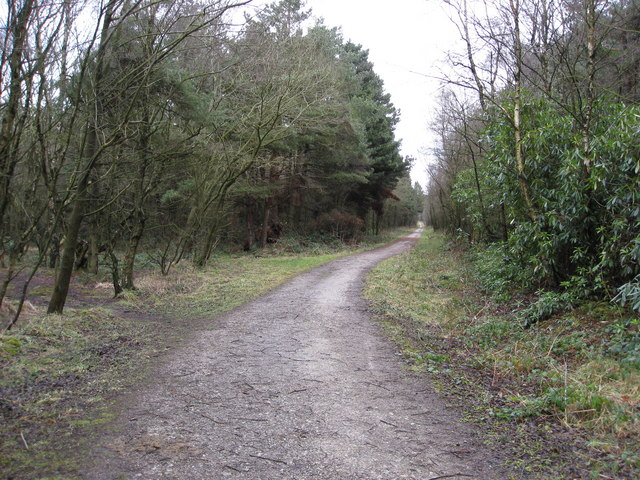 Farley Moor - Woodland Path Junction