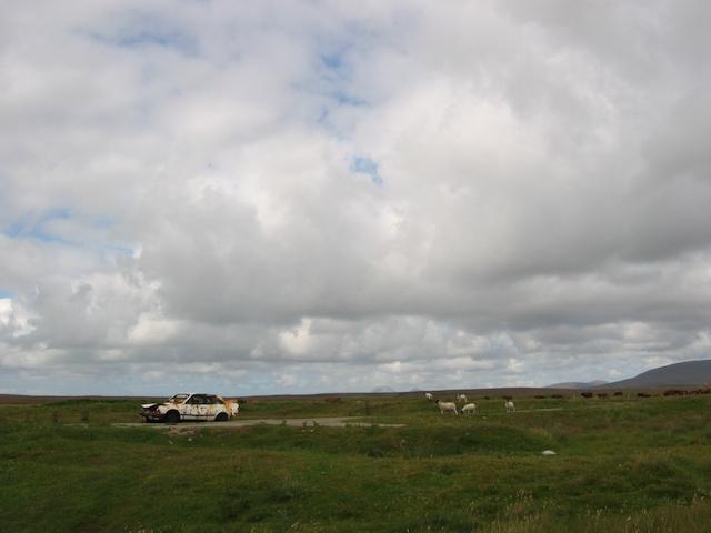 Car and sheep
