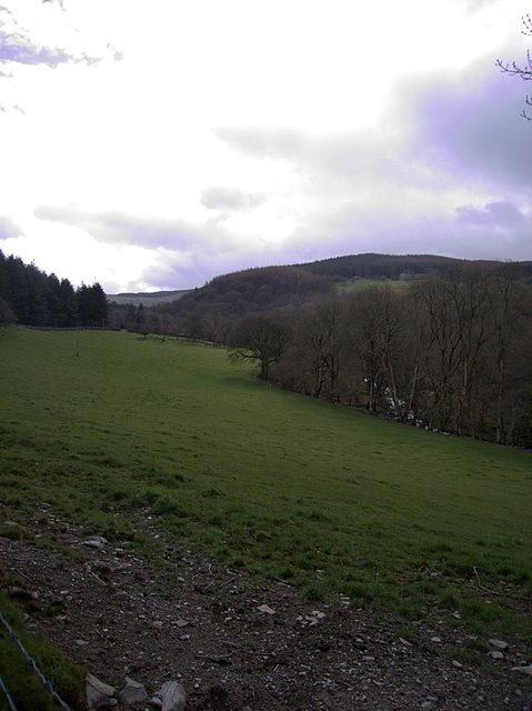 Pasture by the Afon Glasffrwd