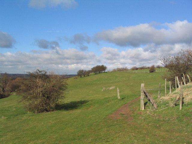 Path on Fox Hill
