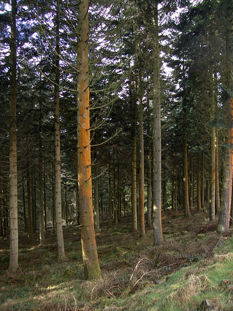 Graig Tynygarreg forest