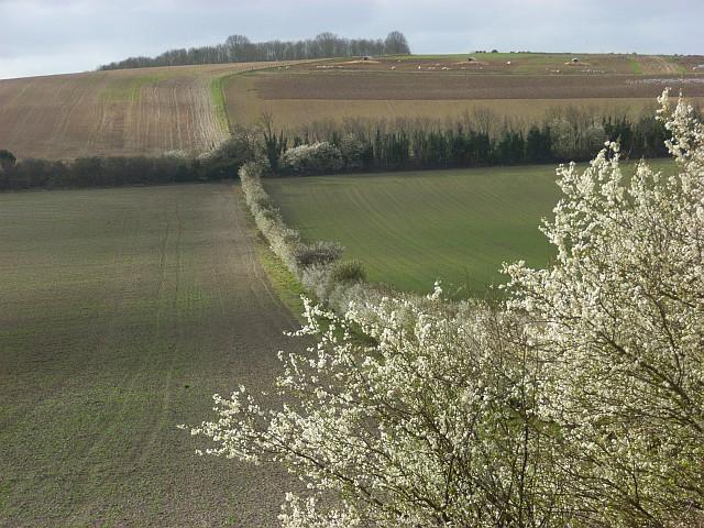 Farmland between Blewbury and Aston Upthorpe