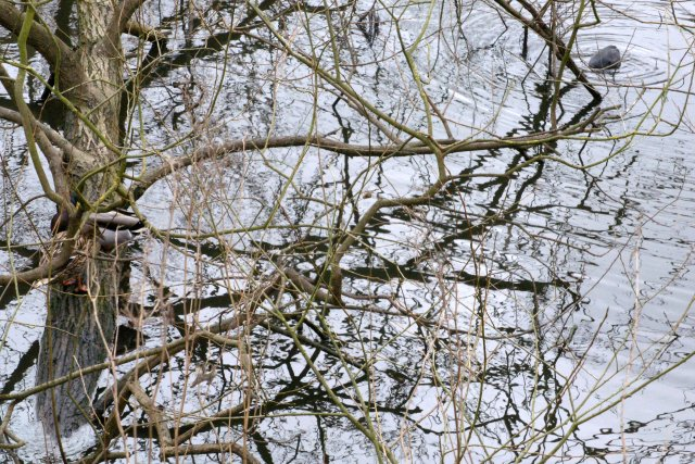 Trunk, branches and twigs