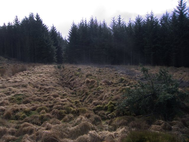 Moorland patch amidst forestry