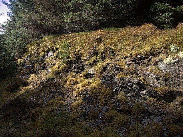 Mossy embankment