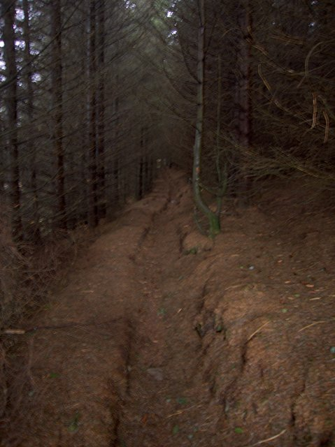 Forest path past Llyn Du