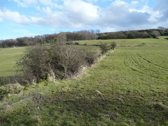 Field boundary, Stainland