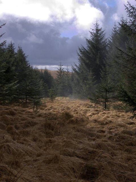 Southern end of Esgair Llyn Du forest