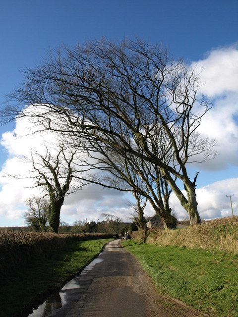Trees near Tregeare