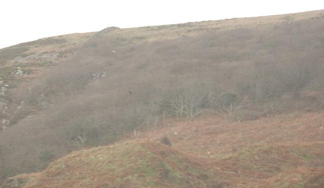 Woodland at Gallt y Bwlch