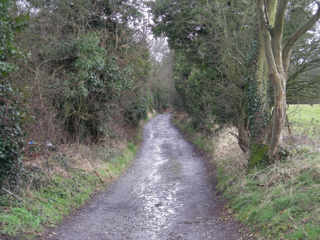 Track to the lake