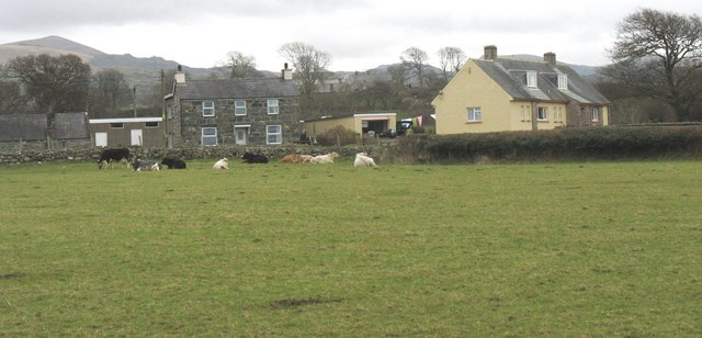 Cattle at Garth-y-glo Farm