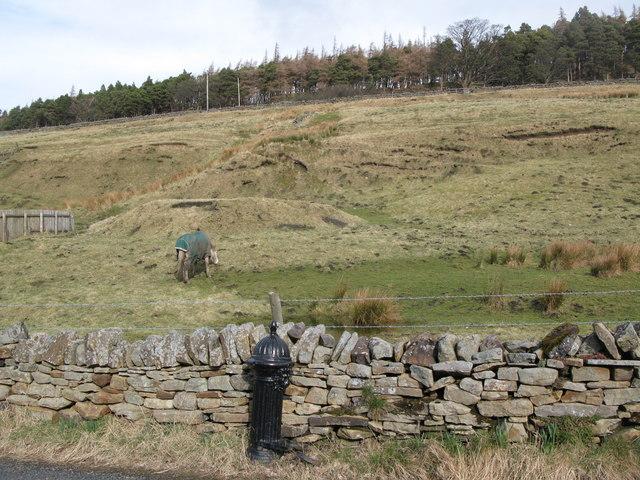 Former mining area, Dirt Pot (2)