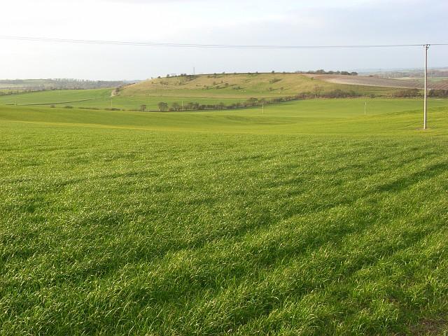 Farmland, Cholsey