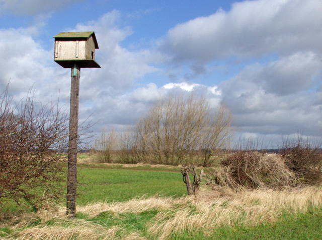 Owl box on Ellerker Sands