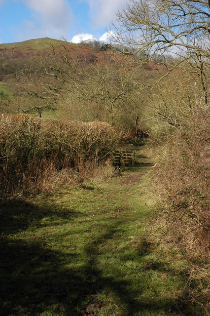 A green lane, Hollybush