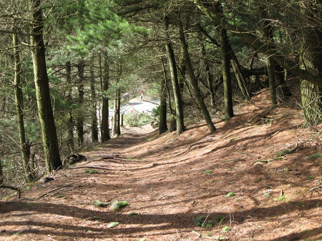 Footpath through the pines (2)
