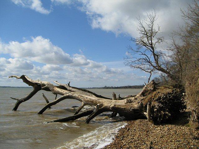 Fallen tree in The Grove