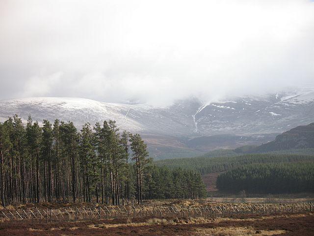 Gleann Chomhraig, the forest edge