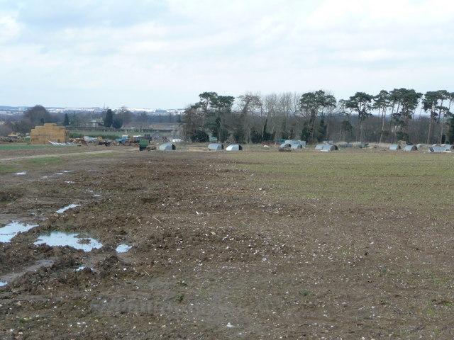 Free-range pig farm