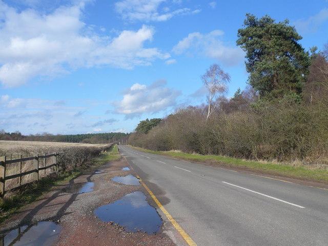 Sherwood Forest - Swinecote Road (B6034)