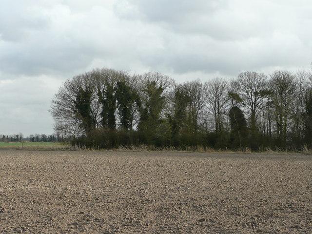 Shelter belt south of Bedford Farm