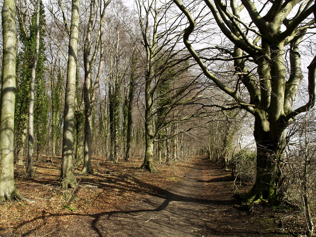 The Wolds Way in Little Wold Plantation