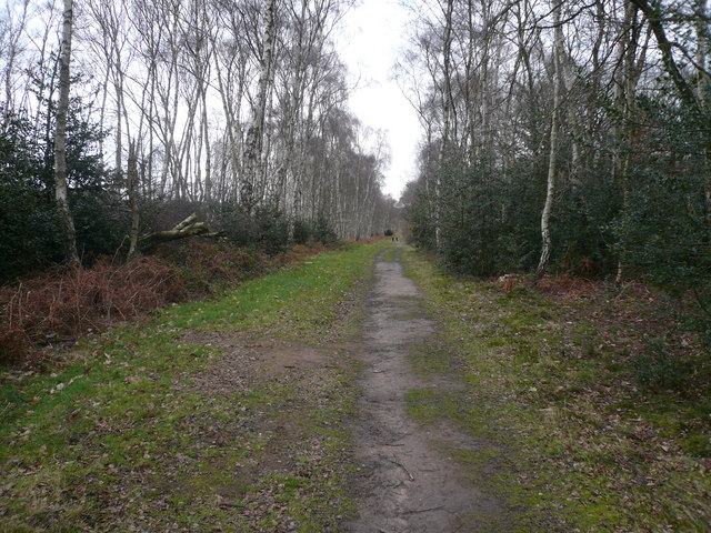 Sherwood Forest - Bridleway