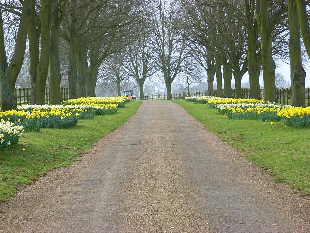 Burrow Farm driveway