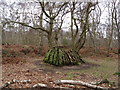 SK6268 : Sherwood Forest - Unusual Tree  Stump by Alan Heardman