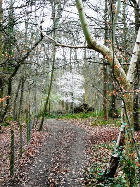 Whiteness in Harpsden Wood