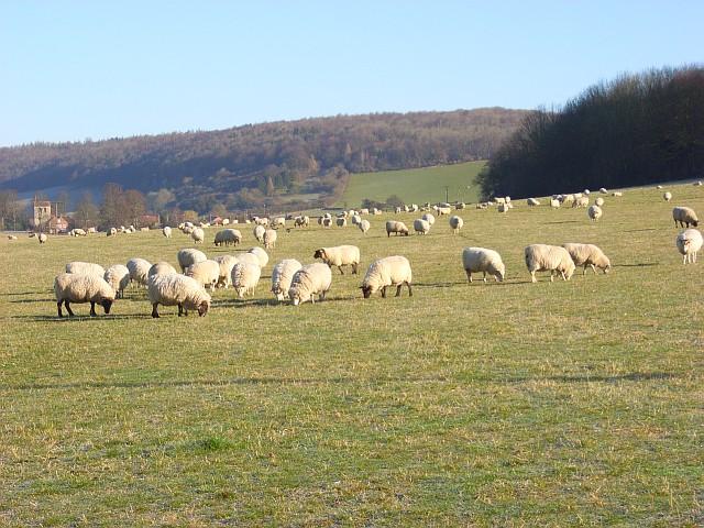 Pasture, Skirmett