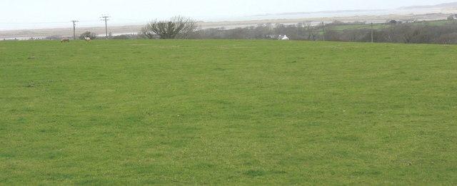Cattle in the fields of Geufron Farm