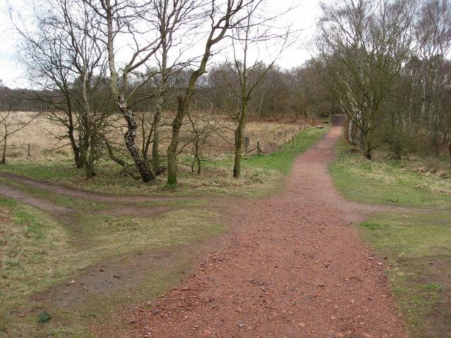 Sherwood Forest - Woodland Footpaths