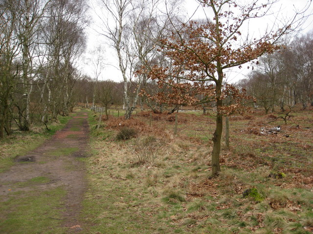 Sherwood Forest - Footpath View
