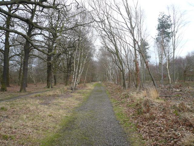 Sherwood Forest - Robin Hood Way