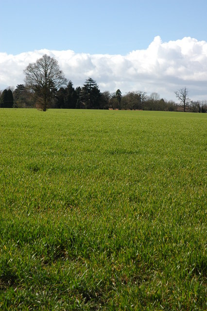 Cereal field at Birtsmorton