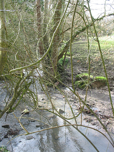 Brook through a tangle of branches