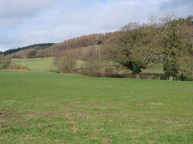 Grazing land SW of Haugh Wood