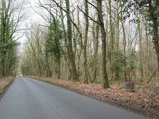 Road through Haugh Wood in winter