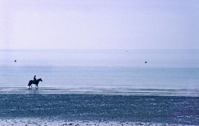 Horse being exercised on beach, Bognor Regis, West Sussex