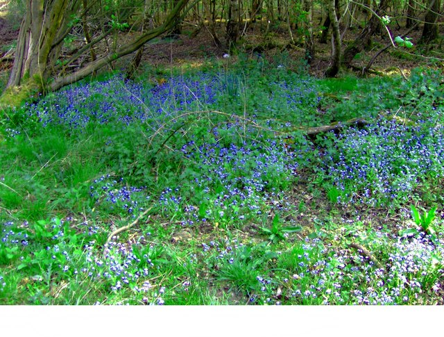 A magical corner in Theberton Woods
