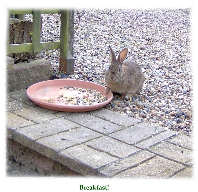 Breakfast Buffet at Rattla Corner!