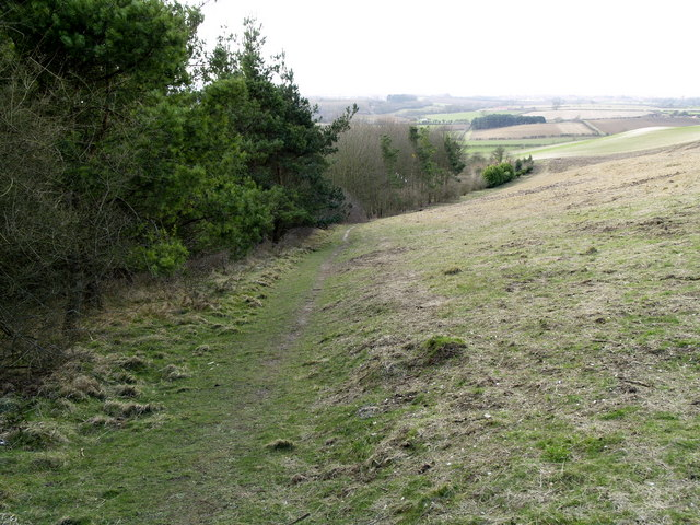 The Path above Jackdaw Plantation