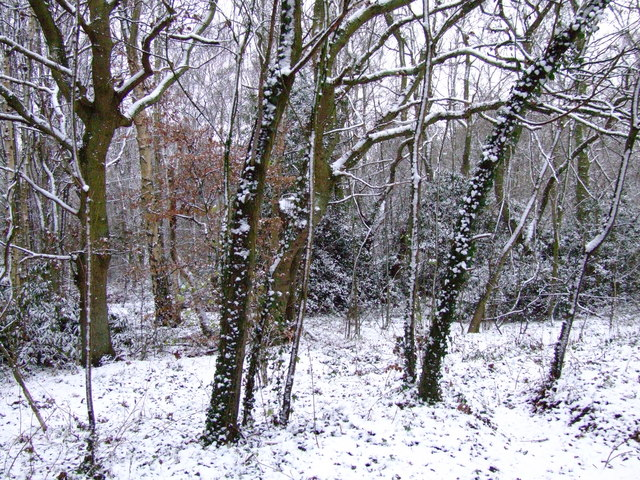 Snow at Town End Plantation