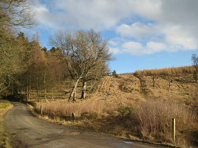 Blackcraig Forest
