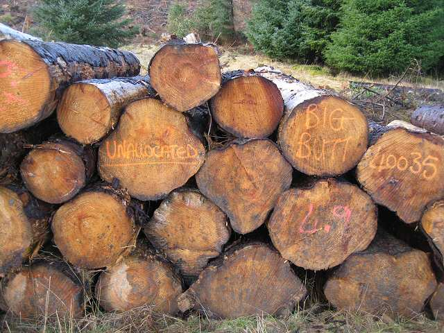 Timber stack writings